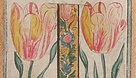 Drawings of tulips